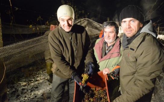 Experti se shodli, od kterého moravského vinaře je nejlepší letos kupovat jiskřivý mok. Máme podrobnosti