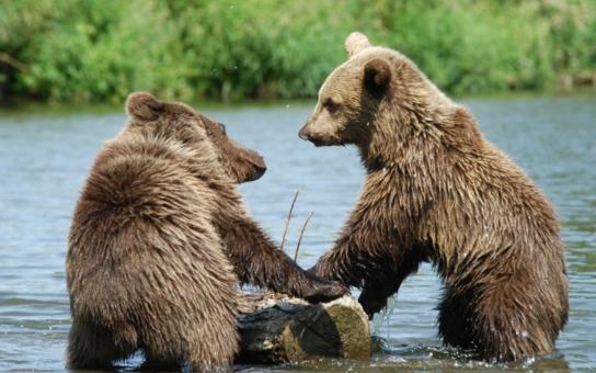 S medvědicí, s medvědem, vždycky k cíli dojedem! Poznávejte svou vlast s medvíďaty Agátou a Martinem