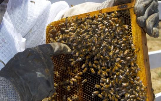 Začínající včelaři dostanou od Pardubického kraje takřka milion korun. Nejmladšímu žadateli je čtyřiadvacet let