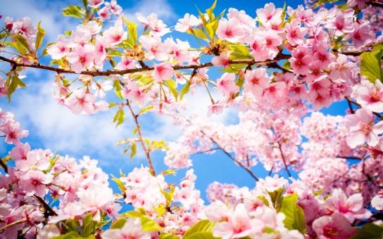 To pravé jaro je tu! Vytáhněte trička s krátkými rukávy a sluneční brýle, do konce týdne bude většinou hezky. Na kytky na balkón je ale ještě brzo