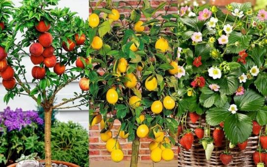 Zeleninu, bylinky, a dokonce i ovoce můžeme pěstovat i uprostřed sídliště