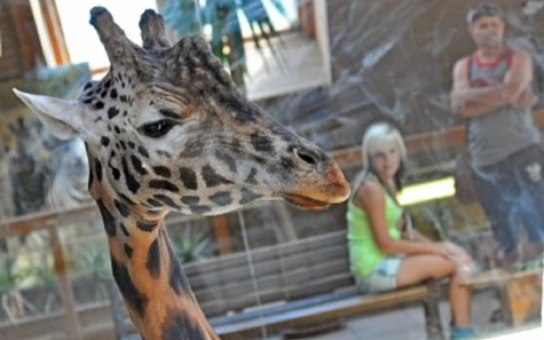 Zlínská zoo chystá unikát - Řeku trávy. V hlavní roli aligátoři. Stihnete ještě přijít za kačku?