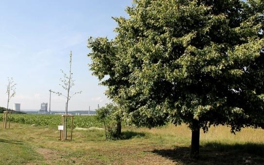Obce mohou žádat o grant pro podzimní výsadbu alejí. Energetická společnost také apeluje na elektronické faktury