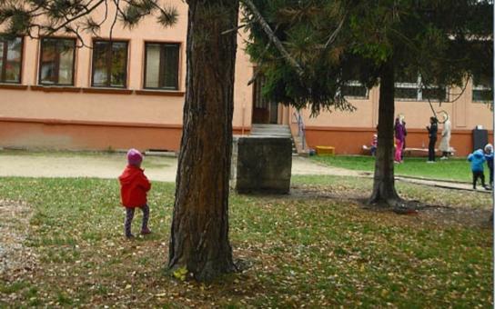 V Přerově pokácejí desítky stromů. Že je to škoda? Jde o dřeviny u škol a školek, které by mohly ublížit dětem