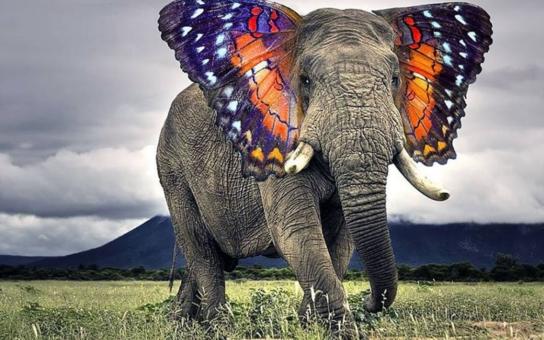 Znáte třeba slonýla nebo zlatého relblouda? Fantastická zvířata a kde je najít: Nečekejte ale tlustočervy, karkulinky, bodloše, ani hrůzostrašnou mantichoru