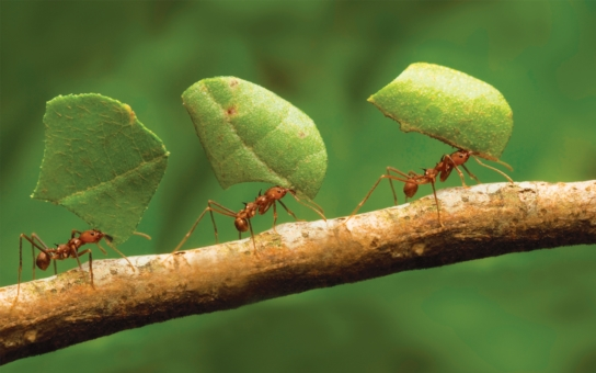 O pilném Mravenci, kterému šéfuje nabušený manažer Lev, a jeho novém kolegovi Švábovi. Pokud pracujete v kanclu, přečtěte si bajku, která právě koluje na netu