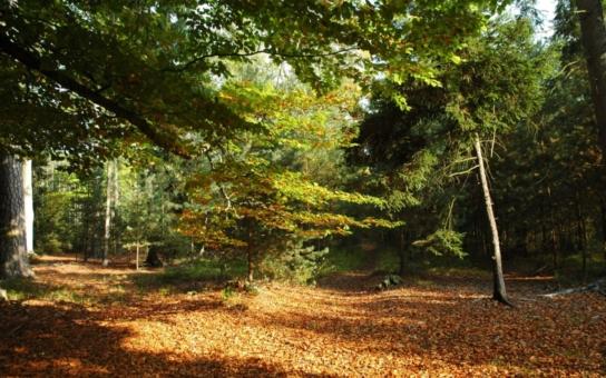 Jakoby nestačily zuby srnců a daňků, do stromů v hradeckých přírodních památkách se zakously i pily. Zmizela více než tisícovka smrků. Co se děje?