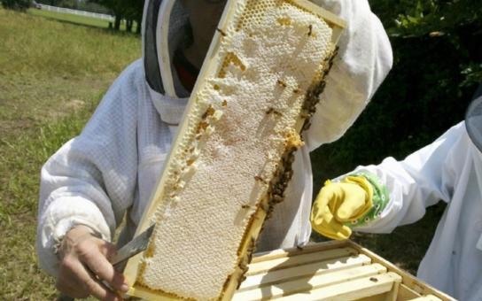 Pardubický kraj podporuje ekologickou výchovu i začínající včelaře. Je potřeba je motivovat již od útlého věku, jsou si vědomi politici