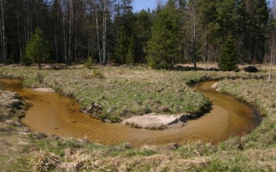 Sucho, povodně... Nepříznivé dopady změny klimatu dokáže zmírnit zadržování vody v krajině. Podívejte se, jak funguje revitalizace šumavských mokřadů