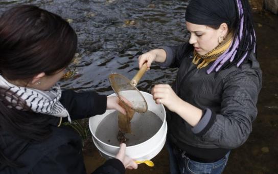 Ryby a sedimenty z Labe a Odry obsahují vysoké koncentrace toxických látek. Potvrzují to výsledky analýzy, kterou provedli odborníci z Arniky. Ryby, ulovené v Labi u Ústí, by vůbec neměly skončit na talíři