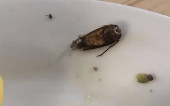 Fotky, ze kterých se vám zvedne kufr: Sperma, krev, výkaly a na zbytcích jídla si pochutnávali vypasení švábi. To objevili policisté, když měli nocovat v ubytovně pro uprchlíky