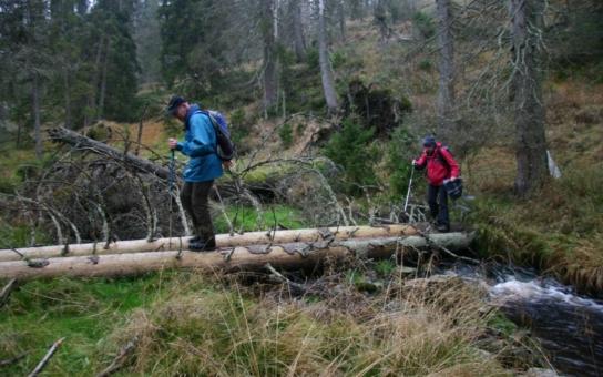 Za poznáním jedinečné přírody v Národním parku Šumava a CHKO Šumava je letos připraveno 130 výprav. Rezervační systém je už spuštěn, ke stálým výletům přibylo pět nových tras