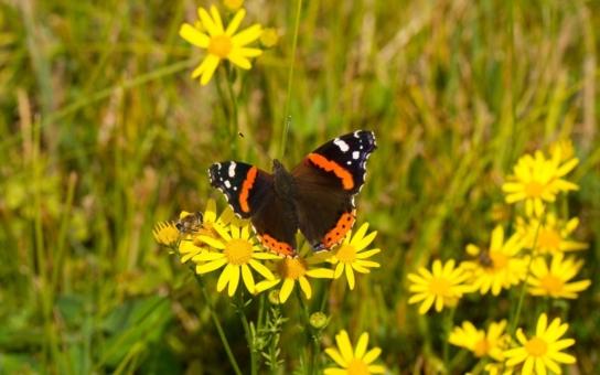 Českým motýlům se daří podél elektrického vedení, babočky ho dokonce využívají při jarním návratu z jihu jako dopravní koridory. Milovníci přírody a motýlů nyní mohou soutěžit o zajímavé ceny