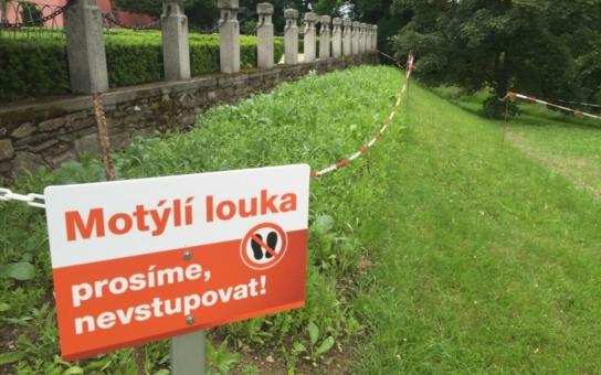 V české přírodě ubývají motýli a již osmnáct druhů úplně vyhynulo. Pomoci jim mají motýlí louky. Jedna nyní vznikla u Temelína
