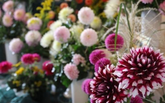 Rytířské sály na pardubickém zámku opět po roce rozzářily pestrobarevné květiny. Jiřinkáři se sdružují už devadesát let