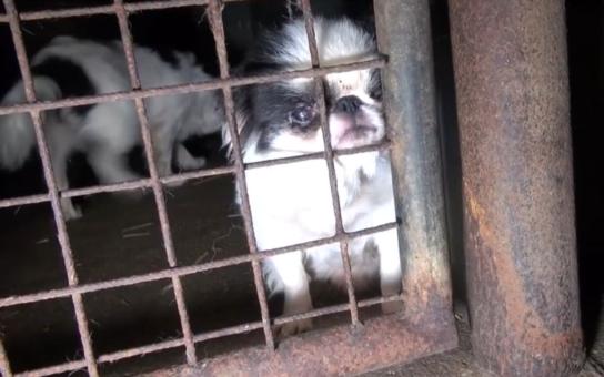 Průkaz původu přímo ze stodoly: Tomu neuvěříte, je mezinárodní rozhodčí a poradkyně chovu, má oficiálně registrovanou chovatelskou stanici. Fotka a video ale dokazují, že jde o hnusnou množírnu psů