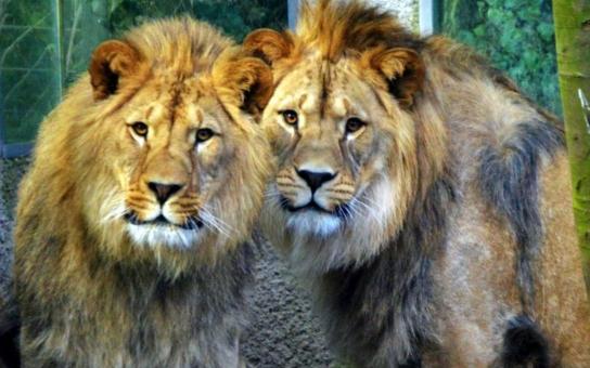 Město Liberec dá tři miliony na investice do zoo a divadla. V zoo peníze použijí na úpravu zvířecího zázemí, v divadle chystají nákup frézky do dílen, projektoru, reflektorů či židlí pro orchestr