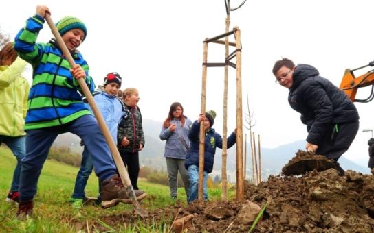 Cestu mezi ústeckým sídlištěm Skalka a Mojžířem lemuje nová lipová alej. Dvoumetrové stromy pomáhali sázet dobrovolní hasiči i děti z místních škol