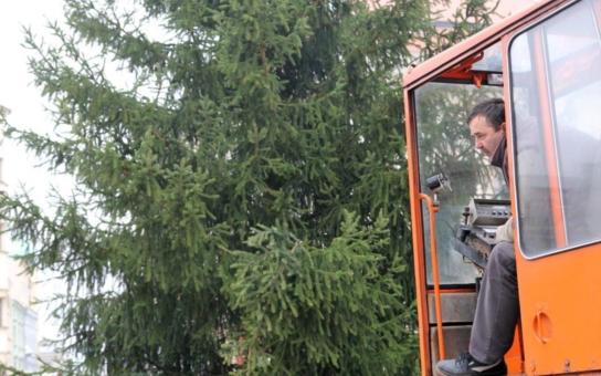 Jihlavský vánoční strom je na svém místě. Desetimetrový smrk vyrostl přímo ve městě, v Demlově ulici, a jeho přeprava proběhla bez problémů