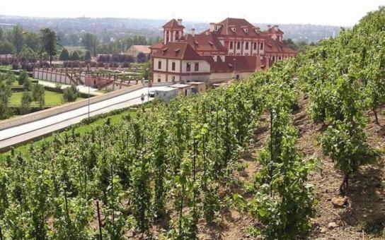 Vinaři mohou svým předkům jenom závidět, se zloději na vinicích se Otec vlasti nemazlil. Kdo kradl ve dne, přišel podle nařízení císaře Karla IV. 'pouze' o ruku, noční pobertové končili rovnou na popravišti