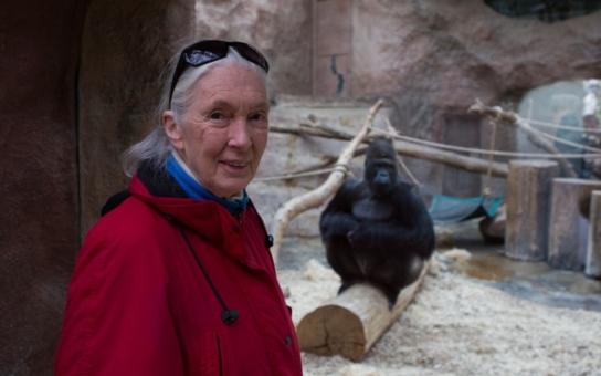 Pražská zoologická přivítala vzácnou návštěvu – slavnou opičí mámu. A kam zamířila? Rovnou za gigantickým Richardem