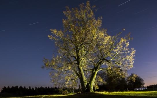 Lípa na Lipce je Stromem roku v České republice, ale tím to nekončí. Když ji podpoříte, možná zaboduje i na evropském poli