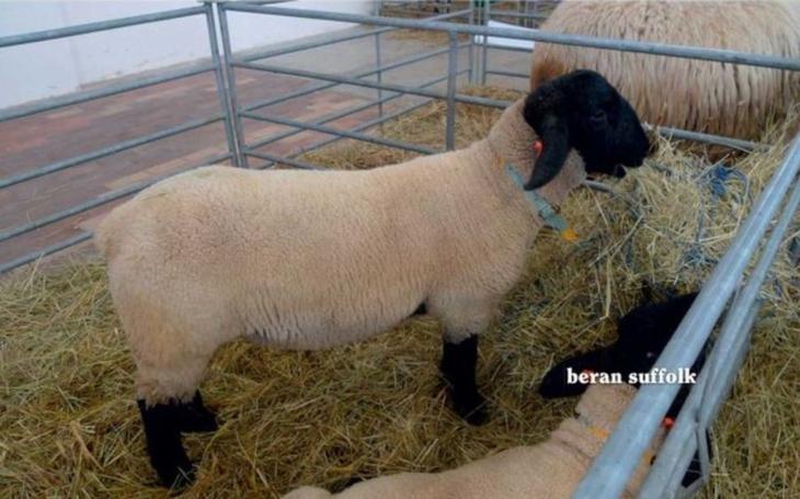 Domácí chov nejsou jenom slepice či králíci. Víte aacefdbef8