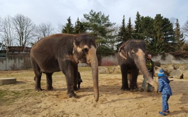 Jeden kraj – tři různé Zoo. Úspěšný projekt pokračuje i letos, do prodeje půjde hned tisíc vstupenek