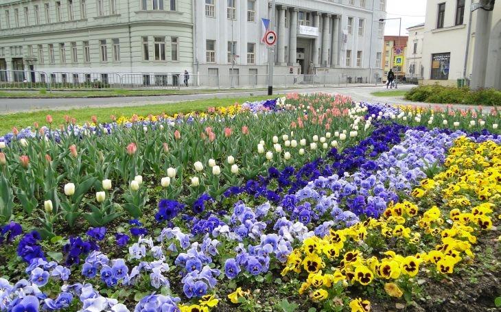 Frýdek-Místek rozkvetl, v létě přibudou i záhony s vyobrazeným logem města. Do květin letos radnice investuje 1,8 milionu