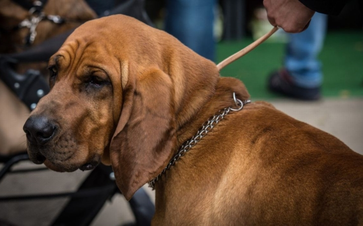Na litoměřické výstaviště se sjelo 2800 zástupců 280 psích plemen. Vítězům předával trofeje starosta Chlupáč