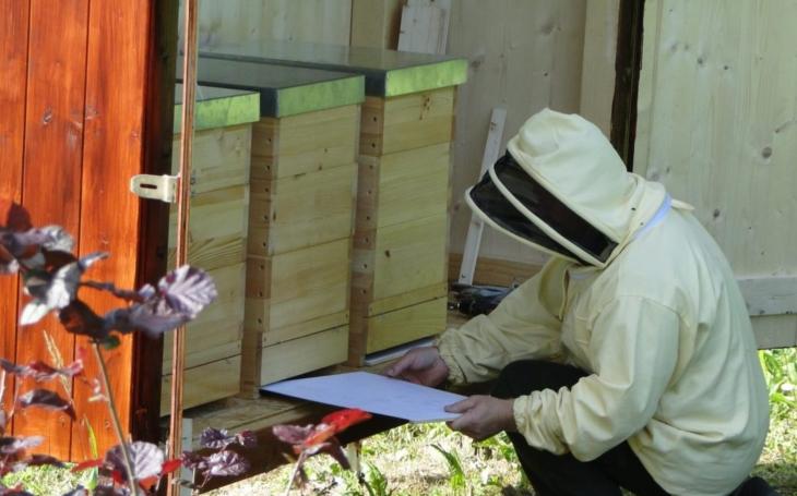 Nový Jičín má své městské včely. Do včelínu v lesoparku na Skalkách byly umístěny tři úly s 150 tisíci obyvatelek