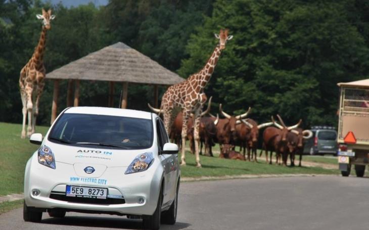 Za volně pobíhajícími antilopami a zebrami v elektromobilu. Zoo Dvůr Králové nabízí návštěvníkům atraktivní a ekologickou novinku