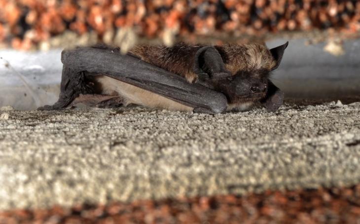 Brdy a jejich neprozkoumané oblasti odkrývají svá tajemství. Výzkumníci hledají vzácné netopýry. Využívají k tomu speciální techniku
