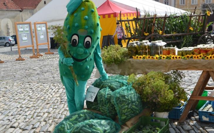 Zelené, šťavnaté, nakládané… Znojmo rovná se okurky. Město si toho váží a tak chystá Slavnosti okurek