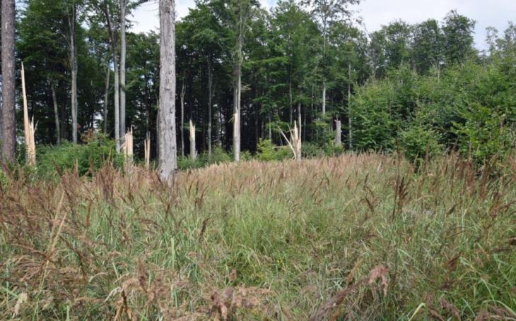 V lesích není bezpečno. Stovky stromů po silných bouřkách na Olomoucku jsou zlomené nebo vyvrácené. Zvažuje se zákaz vstupu do rizikových míst