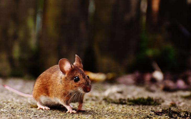 Mířil na myši, trefil sám sebe do břicha. Kdo jinému jámu kopá, sám do ní padá? Hlodavci vyhráli