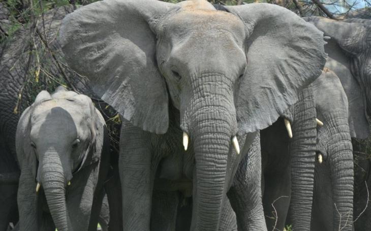 Sloní dáma Rání žije v liberecké ZOO už půl století. Zoologická zahrada chce zmapovat její život a shání fotky