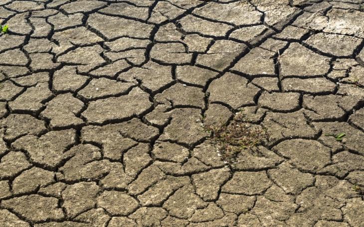 Rozhořel se ostrý spor o to, kdo může za sucho, které sužuje Česko. Vlastníci lesů versus Strana zelených mladého Stropnického