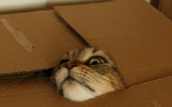 Co všechno se může přihodit nebohé kočce. Tomu neuvěříte; leckdy to jsou situace hodné kaskadérů. Podívejte