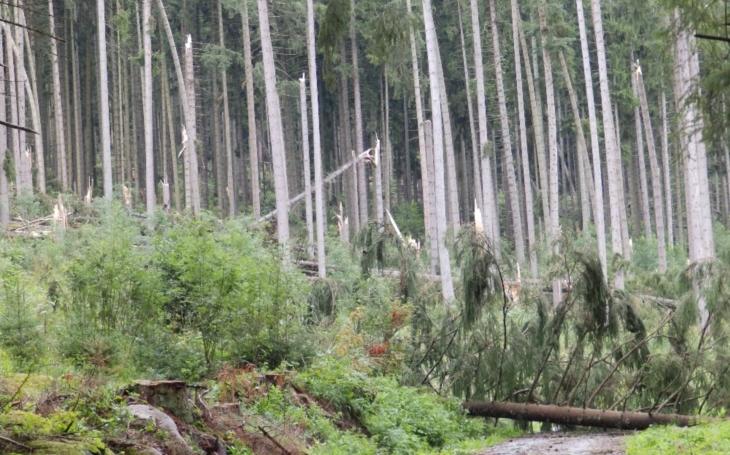 Po bouřce je omezen vstup do Šumavského národního parku. Mohou padat stromy i větve