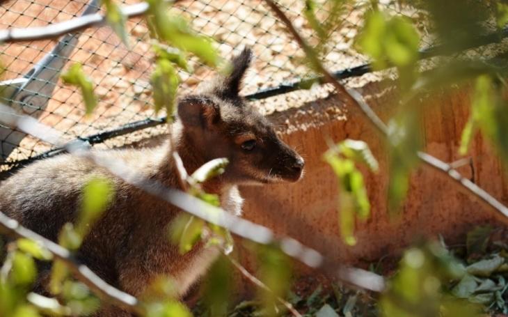 Hupkající klokani i hejna papoušků, prostě jako v Austrálii. Zoopark Vyškov otevřel unikátní pavilón