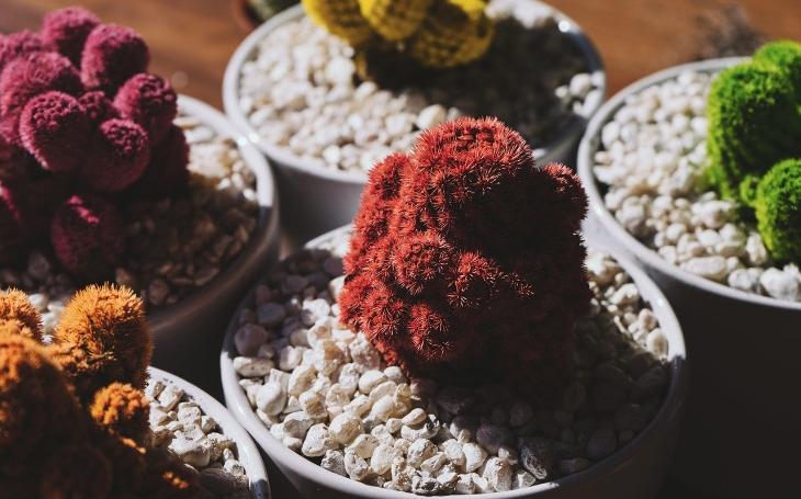 Japonsko ožije v Kroměříži. Ojedinělá expozice vzácných bonsají a suiseki na výstavě Floria Podzim