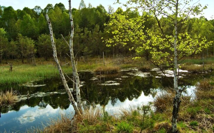 Borkovická blata, Vrbenské rybníky, Pohoří na Šumavě nebo Hlubocké obory. Čeká je revitalizace, kraj získal peníze z EU