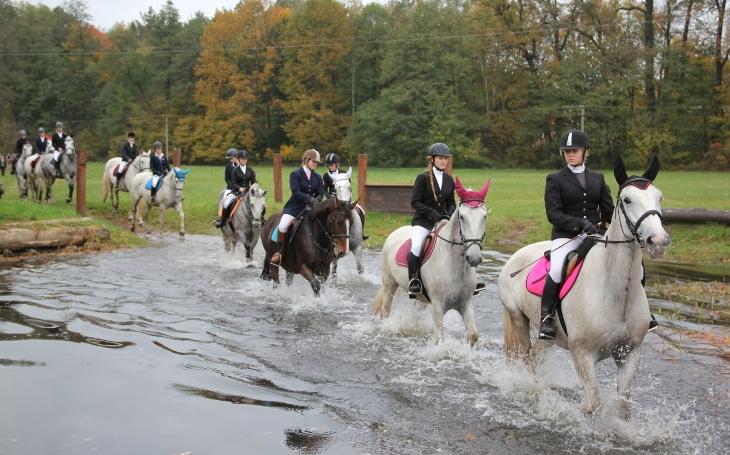 Krásné holky na nádherných koních se brodí vodou a skáčou přes překážky... Proběhla každoroční Hubertova jízda v Kladrubech
