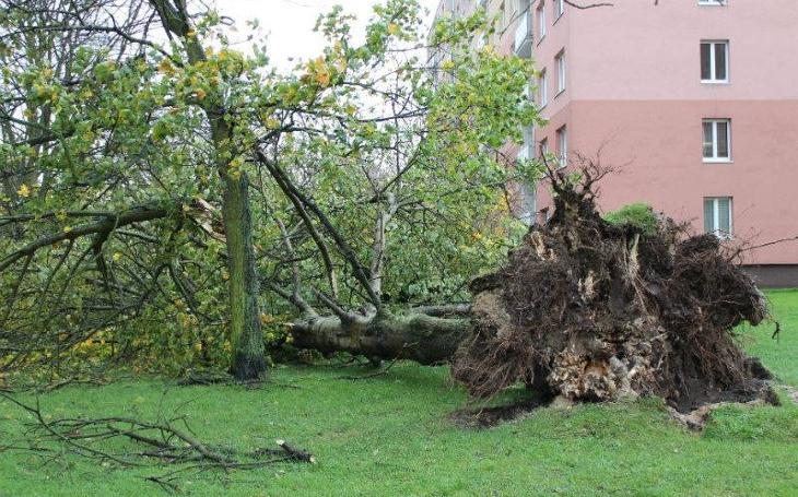 Vichřice na Karlovarsku poničila i hřbitovy. 4000 kubíků dřeva vyvrátil orkán jako nic