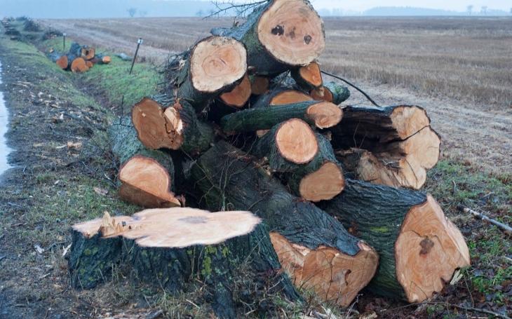 Mizejí aleje: 767 stromů podél silnic zmizelo na Zlínsku jen za tento rok. Vzniká protestní akce