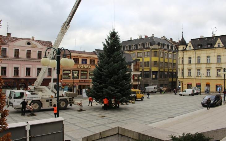Sehnat strom nebylo vůbec snadné. Nakonec dá jabloneckým Vánocům slavnostního ducha jedenáctimetrová jedle