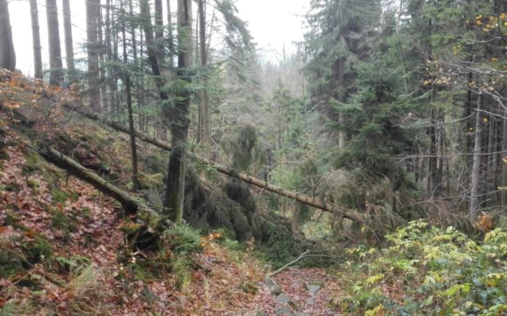 Zákazy vstupu do lesa: Říjnová vichřice Hewart vystavila účet, jeden a půl milionu metrů krychlových dřeva popadalo