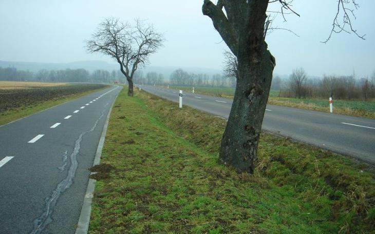 Od roku 2013 se vykácelo 217 000 stromů podél cest a 130 000 se jich vysázelo. Trend musíme obrátit