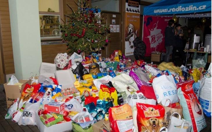 Zlínský útulek pro zvířata v nouzi zažil velké Vánoce. Opuštění psi a kočky dostali krmivo téměř za 40 000 korun